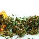 Understanding the medical vs. addictive substances in marijuana